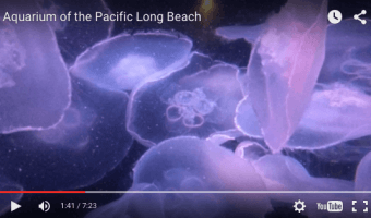 Kickoff of 2015/16 School Year – Aquarium of the Pacific Long Beach